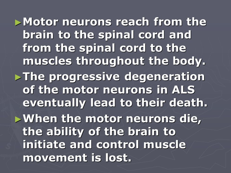 Motor neurons reach from the brain to the spinal cord and from the spinal cord to the muscles throughout the body.