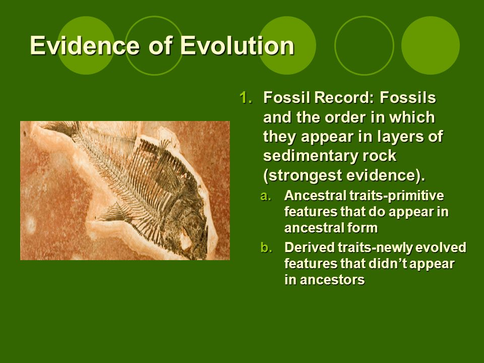 Evidence of Evolution Fossil Record: Fossils and the order in which they appear in layers of sedimentary rock (strongest evidence).