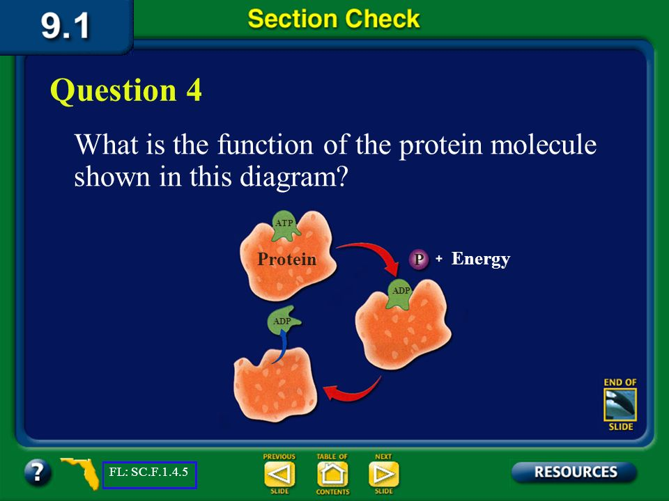 Question 4 What is the function of the protein molecule shown in this diagram ATP. Protein. P. Energy.
