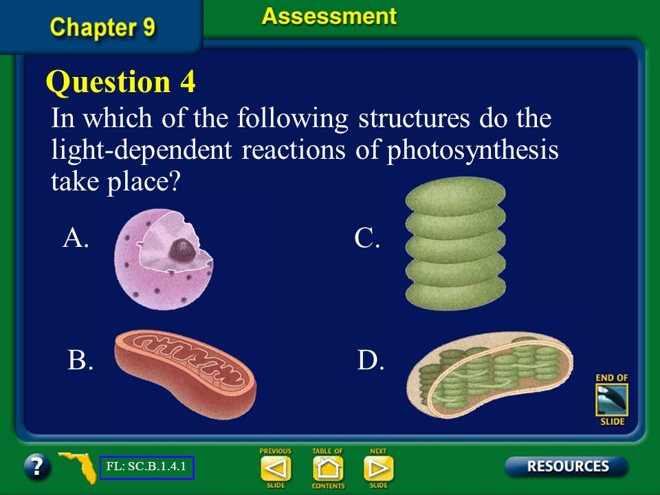 Question 4 In which of the following structures do the light-dependent reactions of photosynthesis take place
