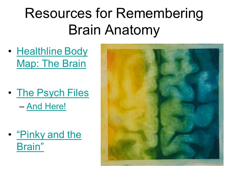 Resources for Remembering Brain Anatomy