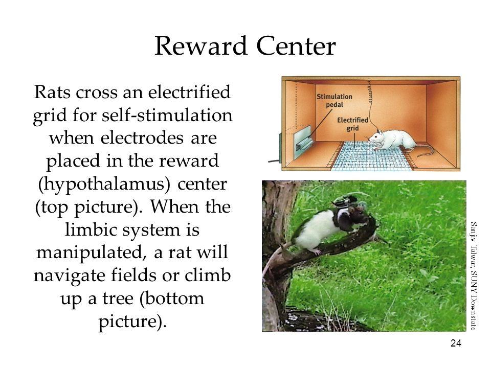 Reward Center