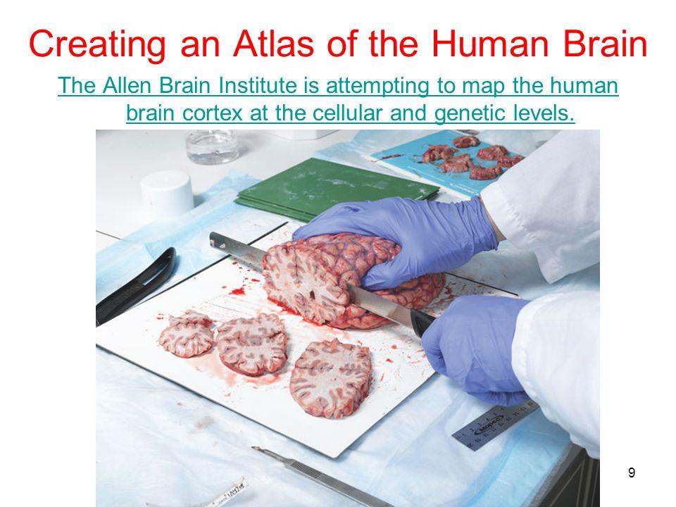 Creating an Atlas of the Human Brain