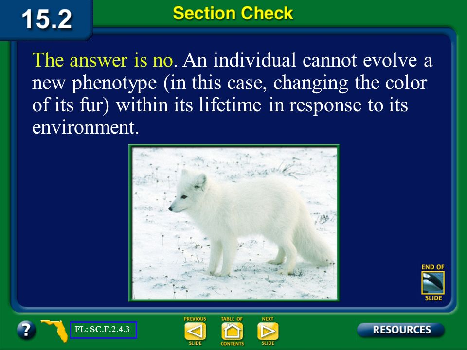 The answer is no. An individual cannot evolve a new phenotype (in this case, changing the color of its fur) within its lifetime in response to its environment.