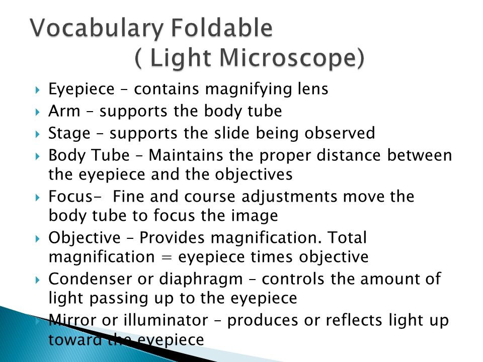 Vocabulary Foldable ( Light Microscope)
