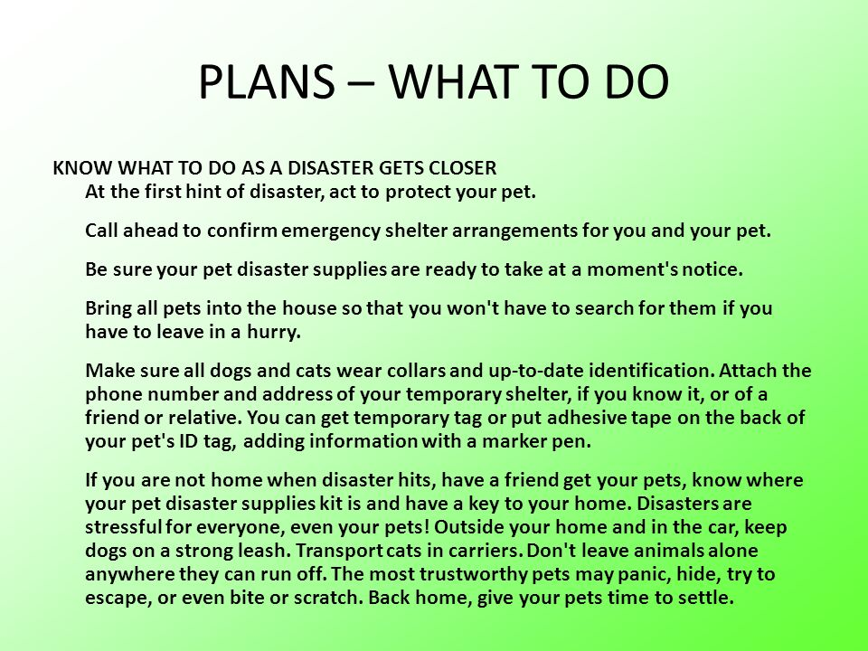 PLANS – WHAT TO DO KNOW WHAT TO DO AS A DISASTER GETS CLOSER At the first hint of disaster, act to protect your pet.