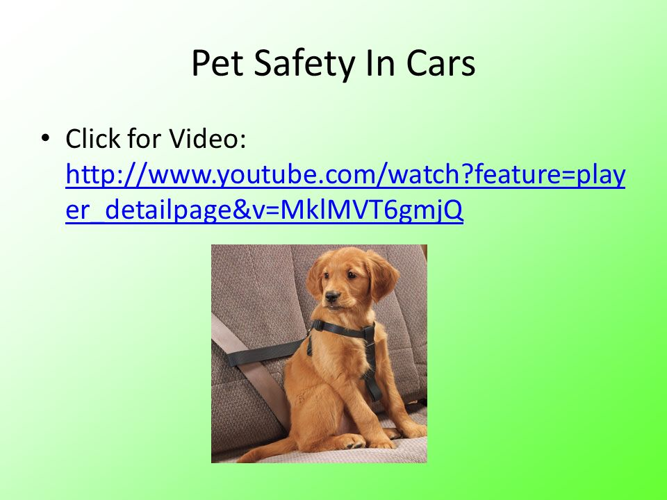 Pet Safety In Cars Click for Video: http://www.youtube.com/watch feature=player_detailpage&v=MklMVT6gmjQ.