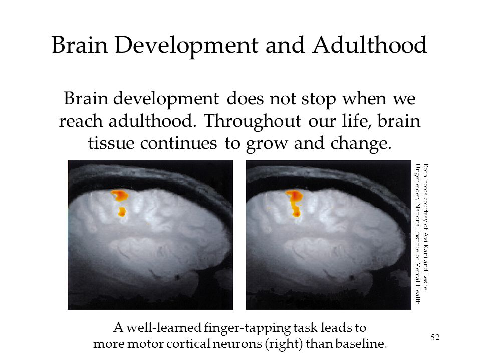 Brain Development and Adulthood