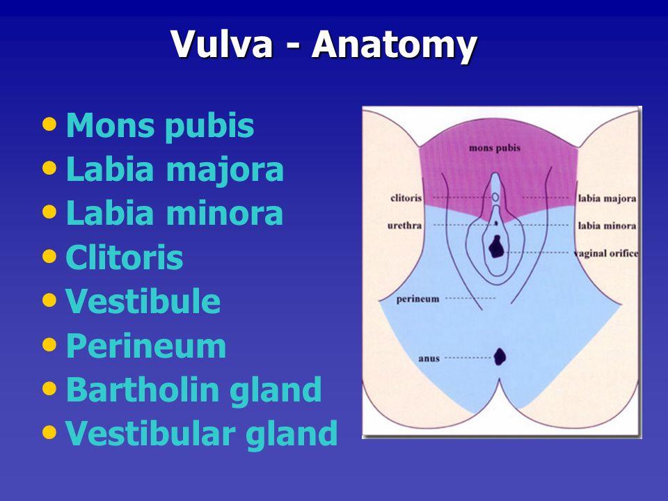 Vulva - Anatomy Mons pubis. Labia majora. Labia minora. Clitoris. Vestibule. Perineum. Bartholin gland.