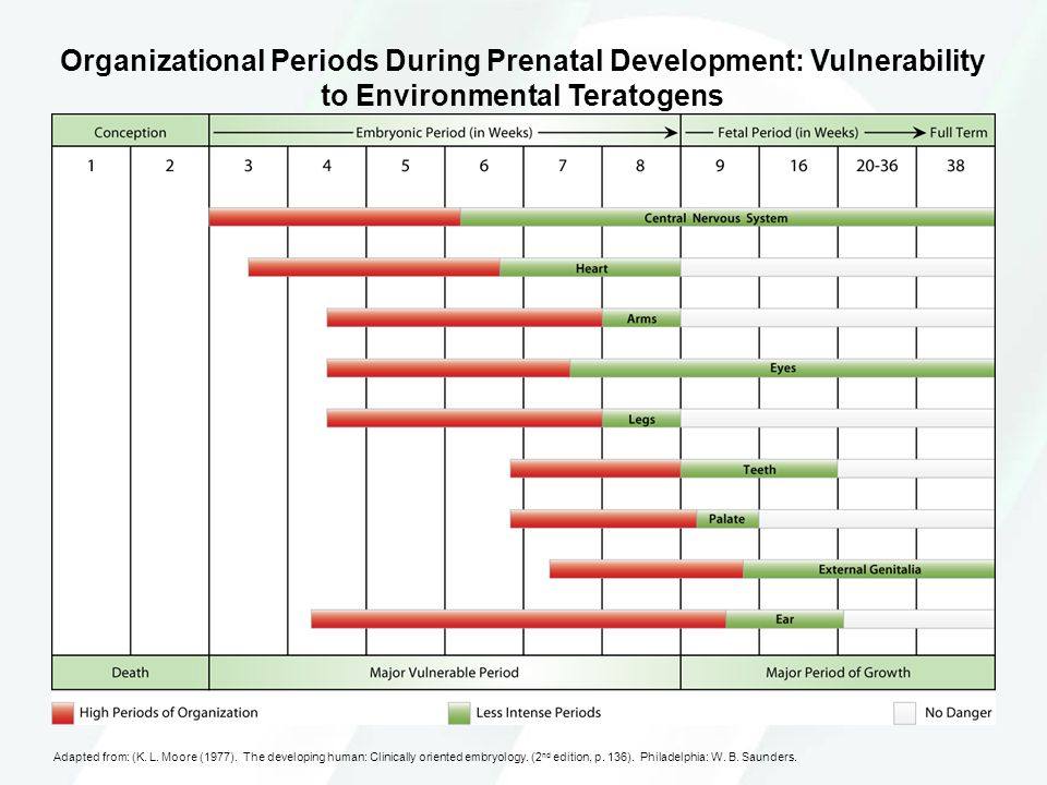 Organizational Periods During Prenatal Development: Vulnerability to Environmental Teratogens