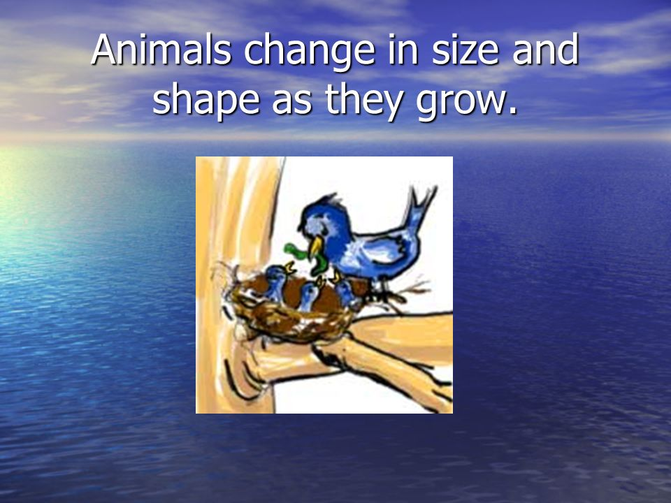 Animals change in size and shape as they grow.