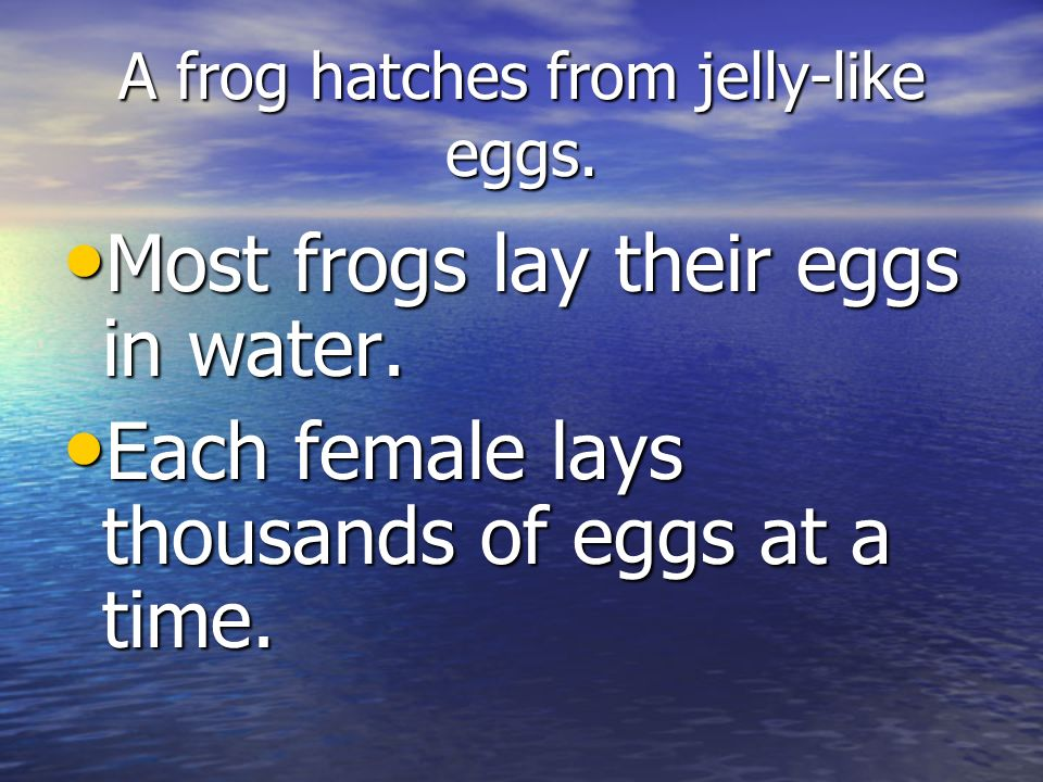 A frog hatches from jelly-like eggs.