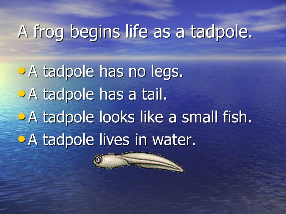 A frog begins life as a tadpole.