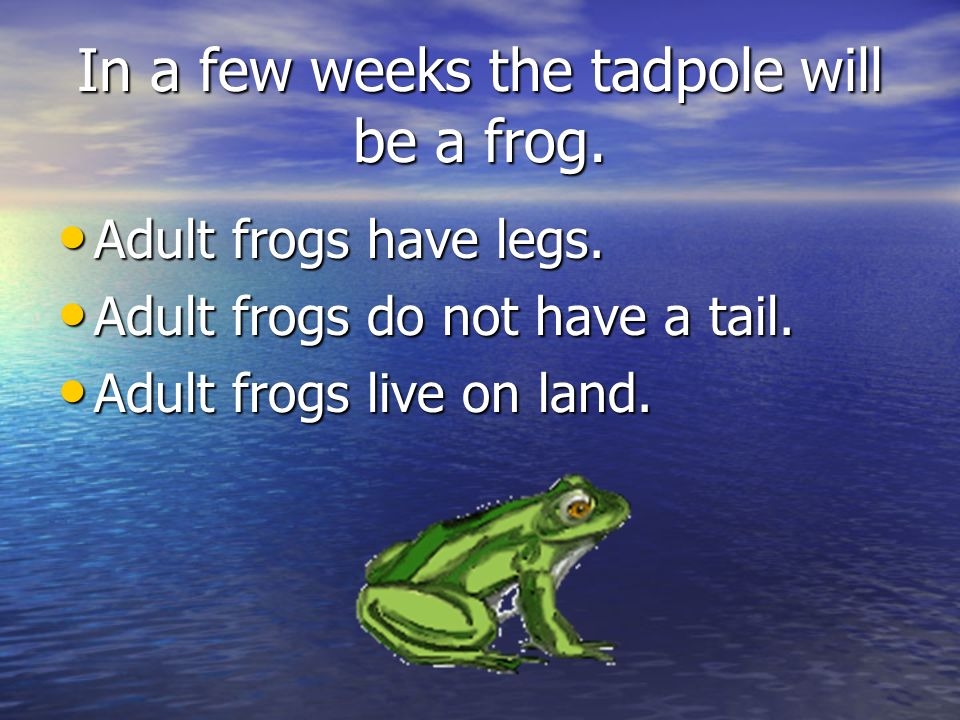 In a few weeks the tadpole will be a frog.