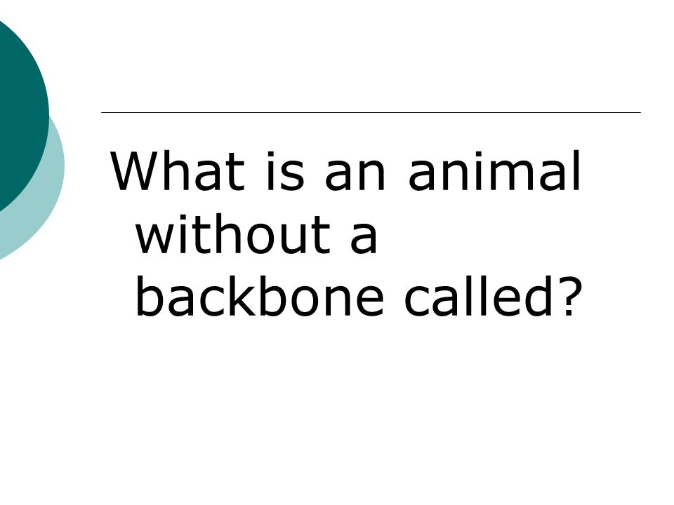 What is an animal without a backbone called