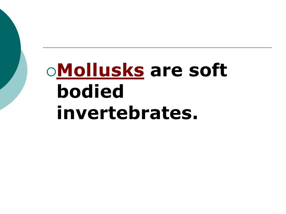 Mollusks are soft bodied invertebrates.