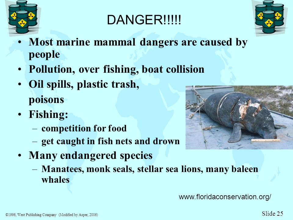 Lesson 7 what eats fish mammals and birds ppt video for Dangers of fish oil