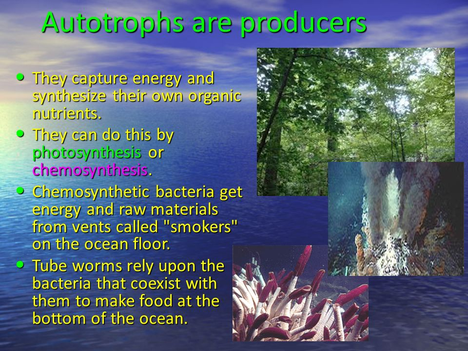 Energy Flow Through Ecosystems - ppt video online download | 960 x 720 jpeg 164kB