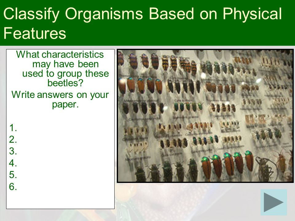 Classify Organisms Based on Physical Features