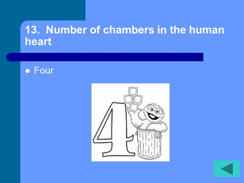 13. Number of chambers in the human heart