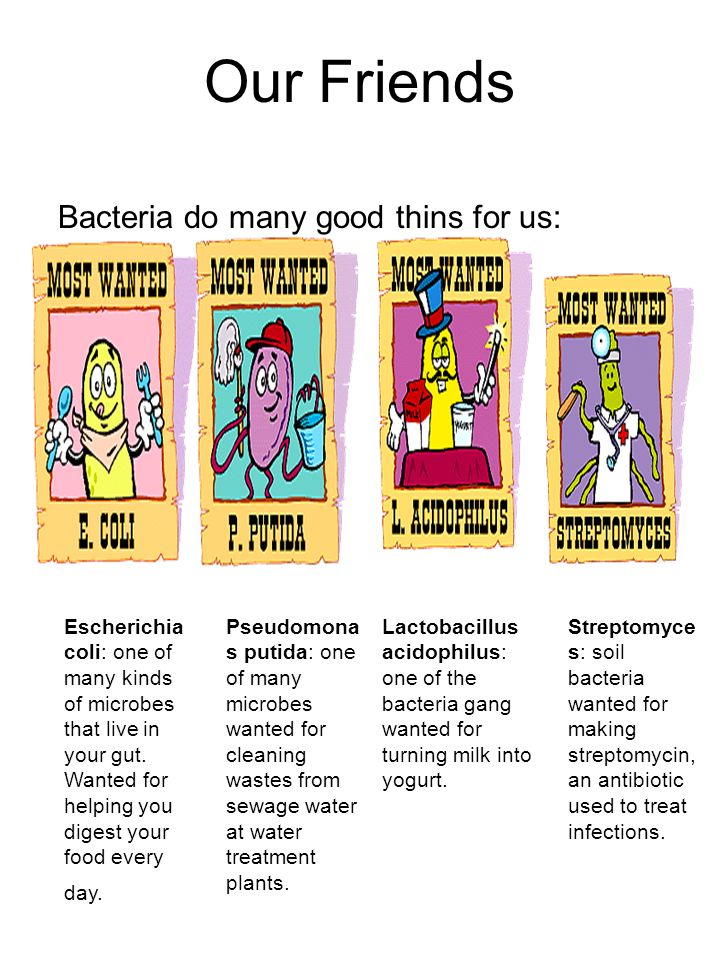 Our Friends Bacteria do many good thins for us: