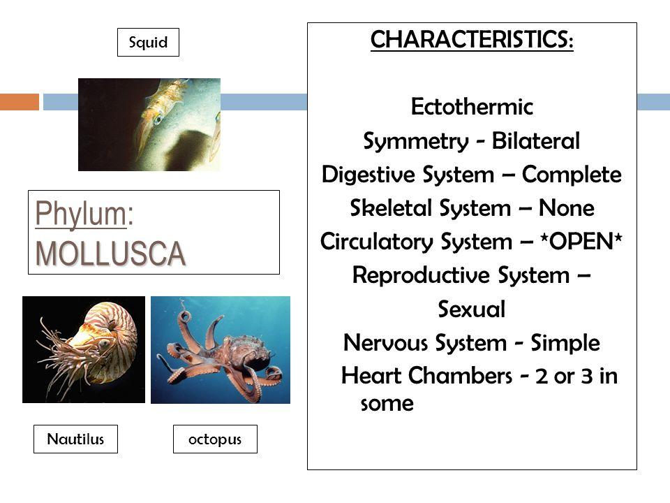 Phylum: MOLLUSCA CHARACTERISTICS: Ectothermic Symmetry - Bilateral
