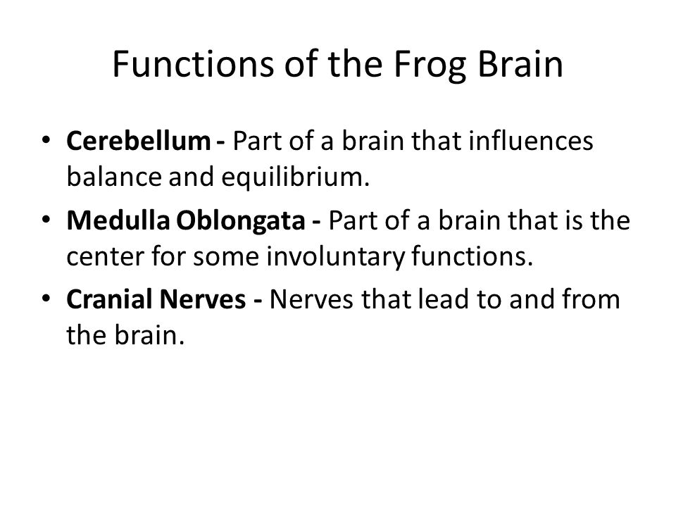Functions of the Frog Brain