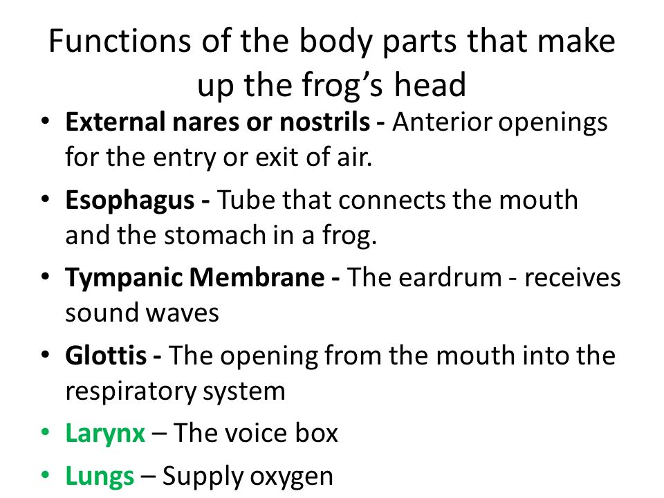 Functions of the body parts that make up the frog's head