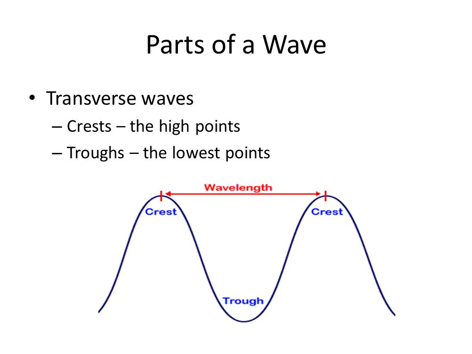 Parts of a Wave Transverse waves Crests – the high points
