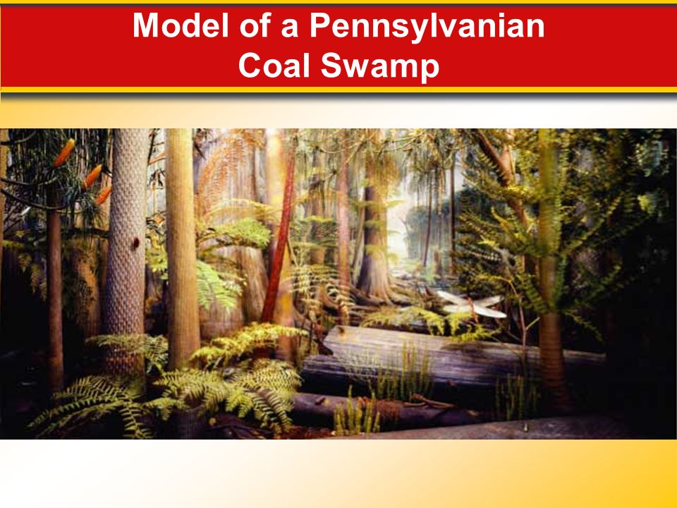 Model of a Pennsylvanian Coal Swamp