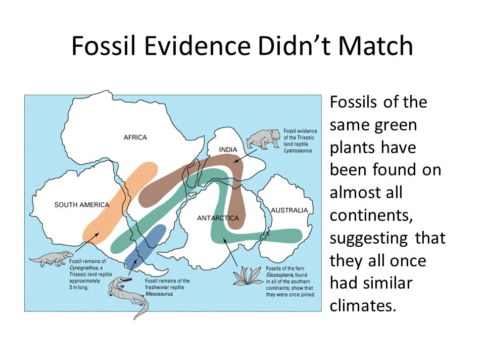 Fossil Evidence Didn't Match