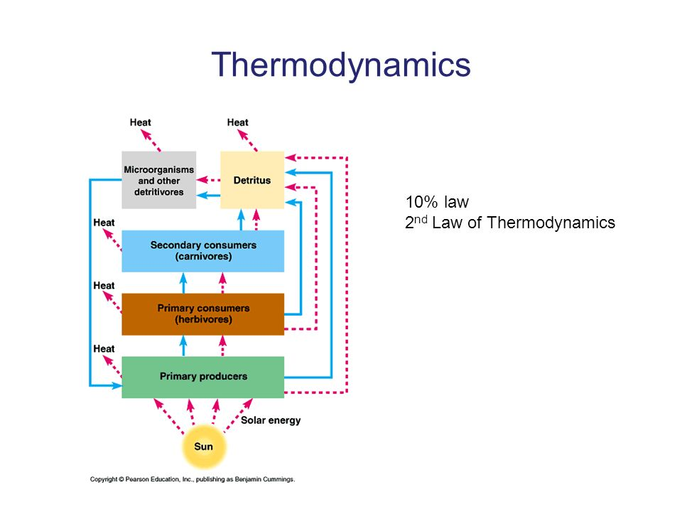 Thermodynamics 10% law 2nd Law of Thermodynamics