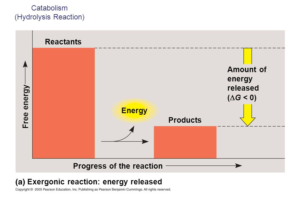 Catabolism (Hydrolysis Reaction)