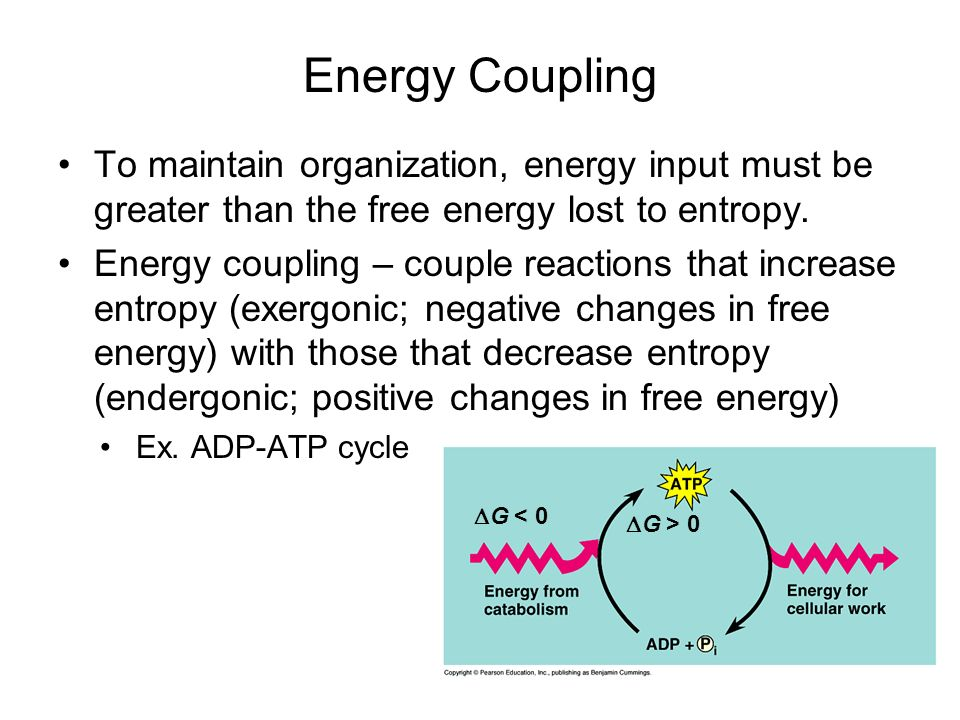 Energy Coupling To maintain organization, energy input must be greater than the free energy lost to entropy.
