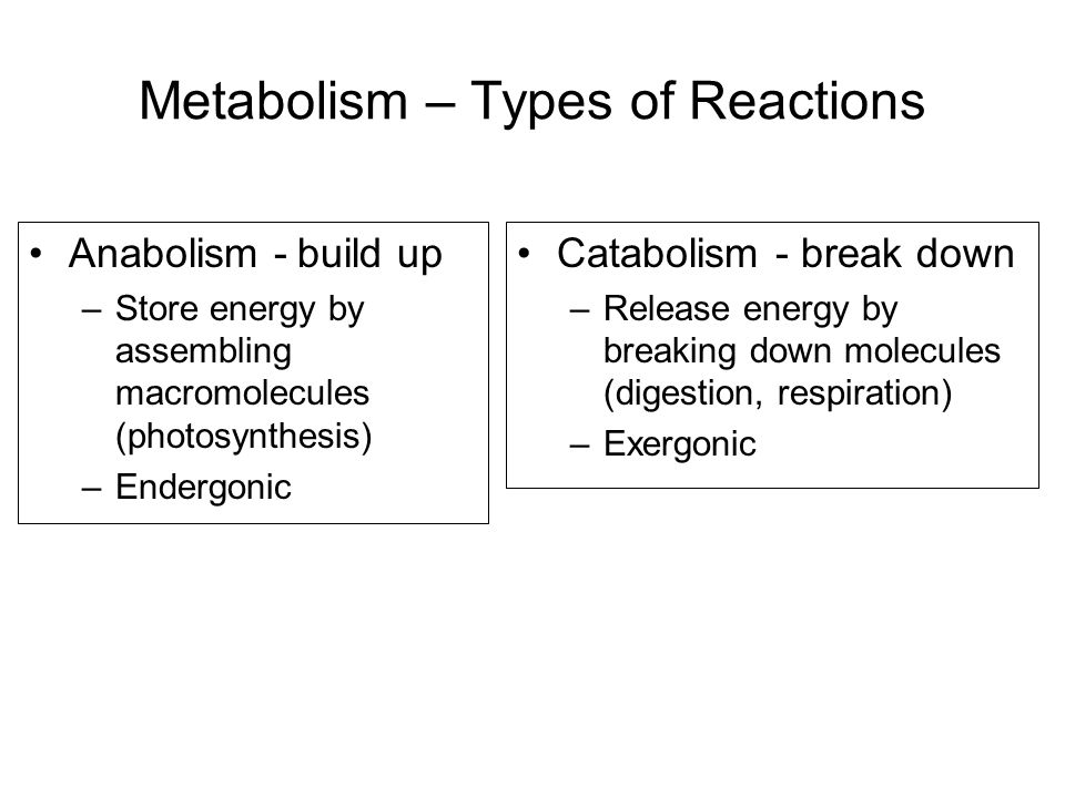 Metabolism – Types of Reactions