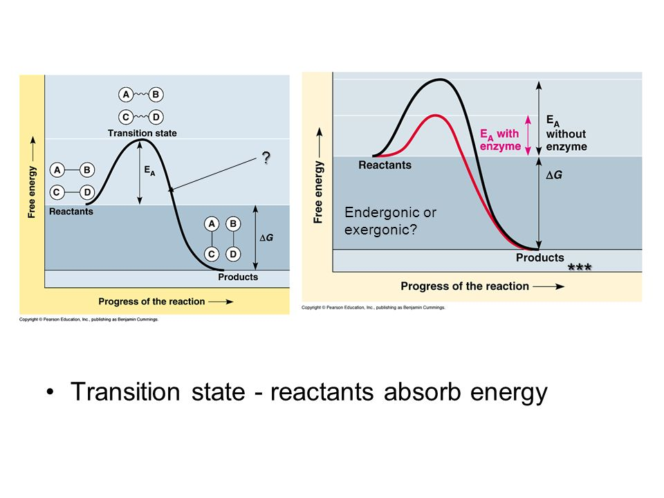 Transition state - reactants absorb energy