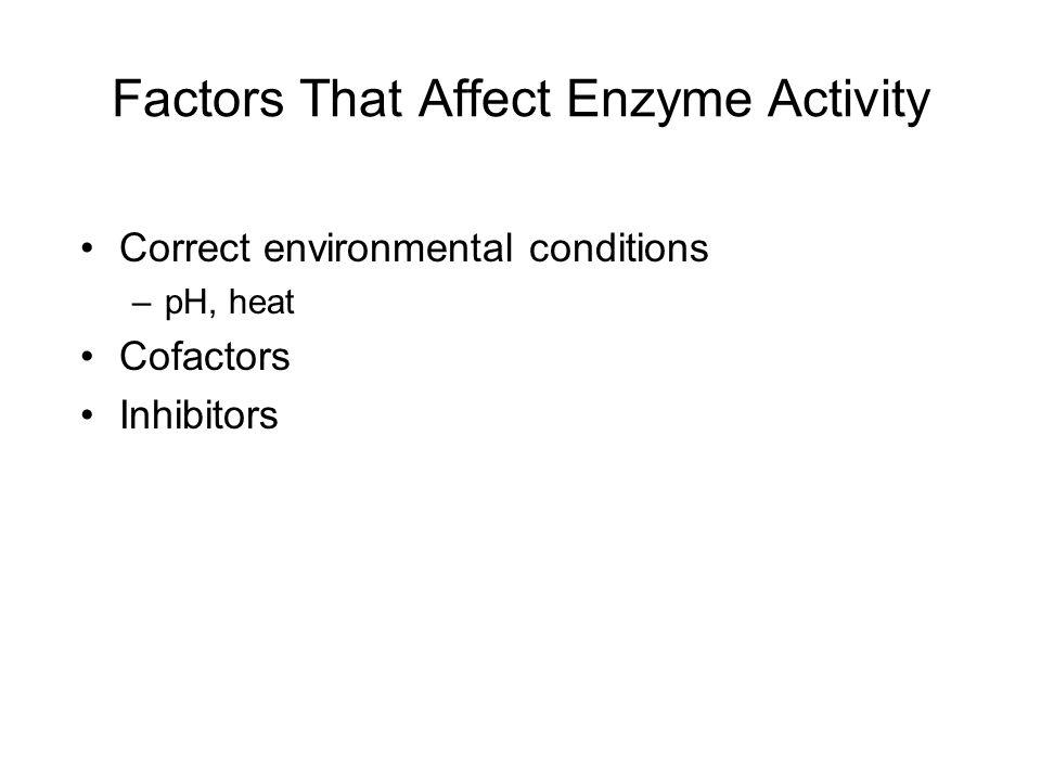 Factors That Affect Enzyme Activity