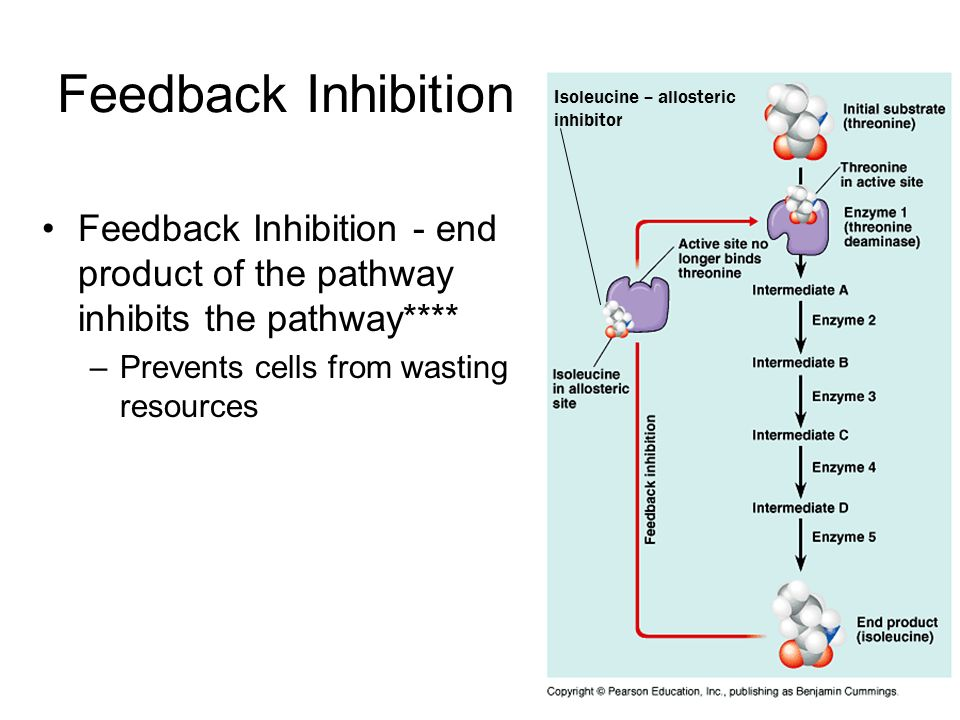 Feedback Inhibition Isoleucine – allosteric inhibitor. Feedback Inhibition - end product of the pathway inhibits the pathway****
