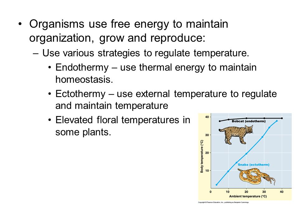 Organisms use free energy to maintain organization, grow and reproduce:
