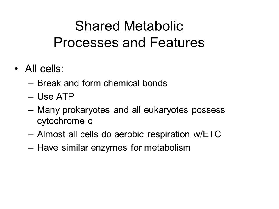 Shared Metabolic Processes and Features