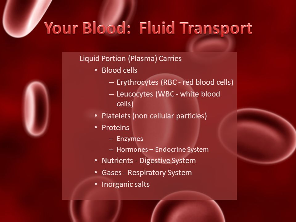 Your Blood: Fluid Transport