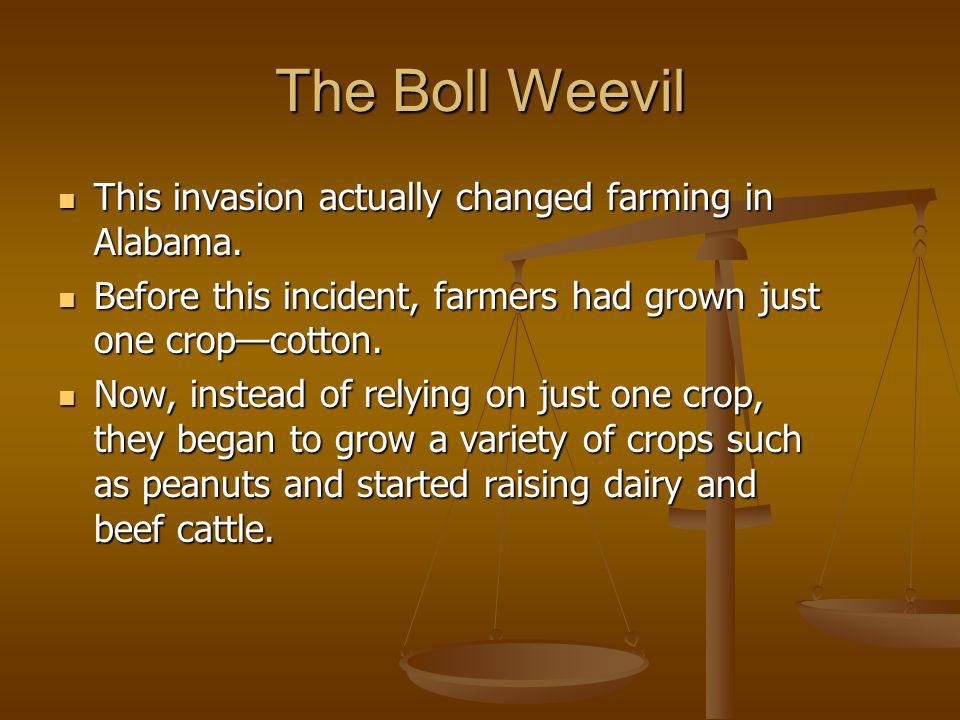 The Boll Weevil This invasion actually changed farming in Alabama.