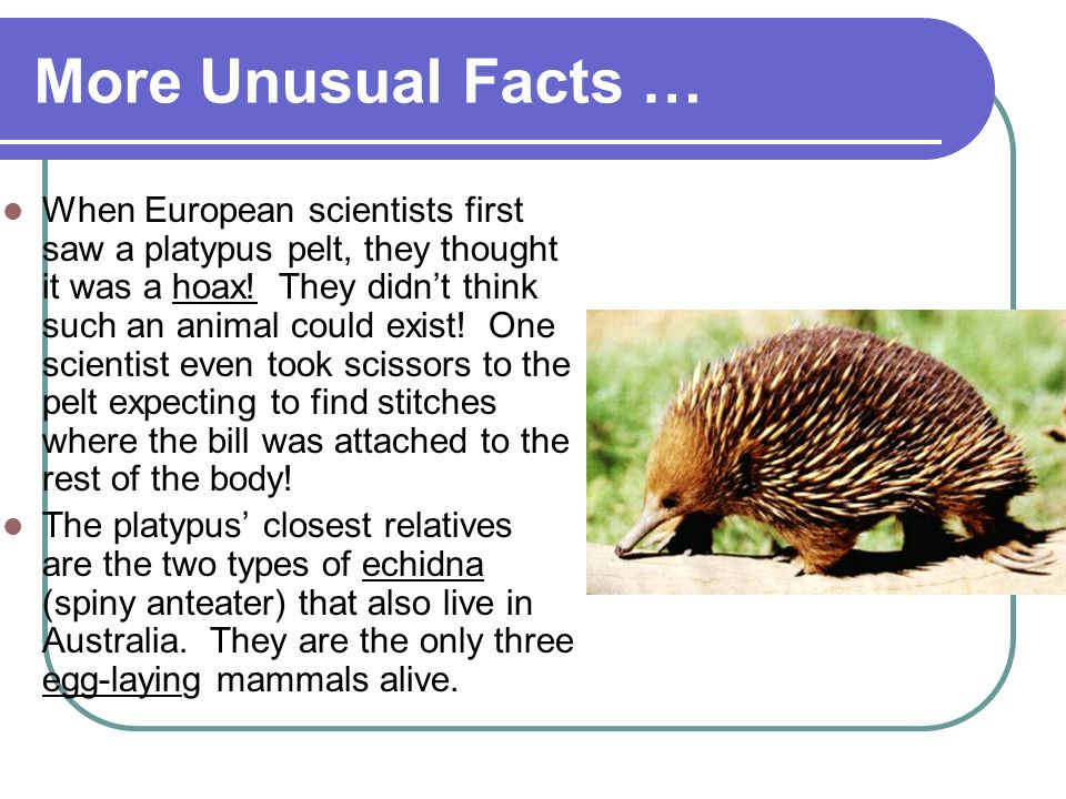 More Unusual Facts …