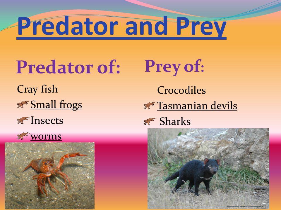 Predator and Prey Predator of: Prey of: Cray fish Crocodiles