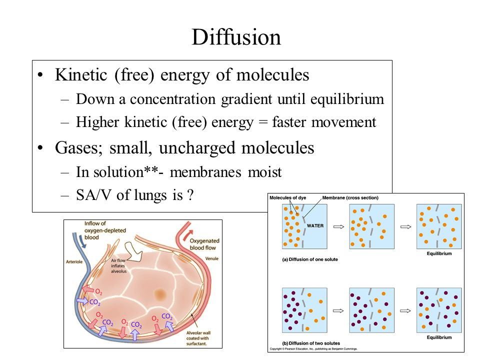 Diffusion Kinetic (free) energy of molecules