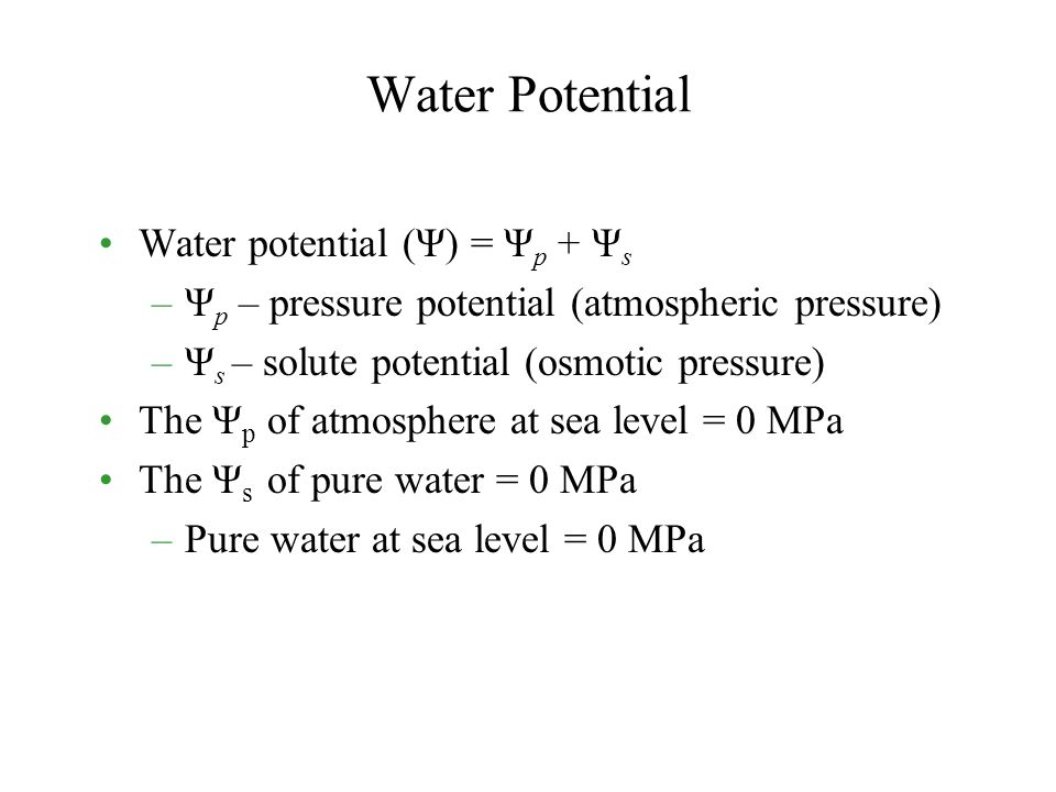Water Potential Water potential (Ψ) = Ψp + Ψs