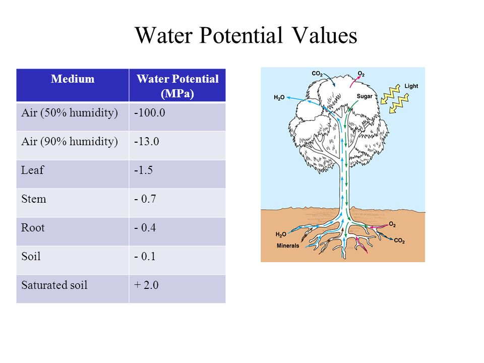 Water Potential Values