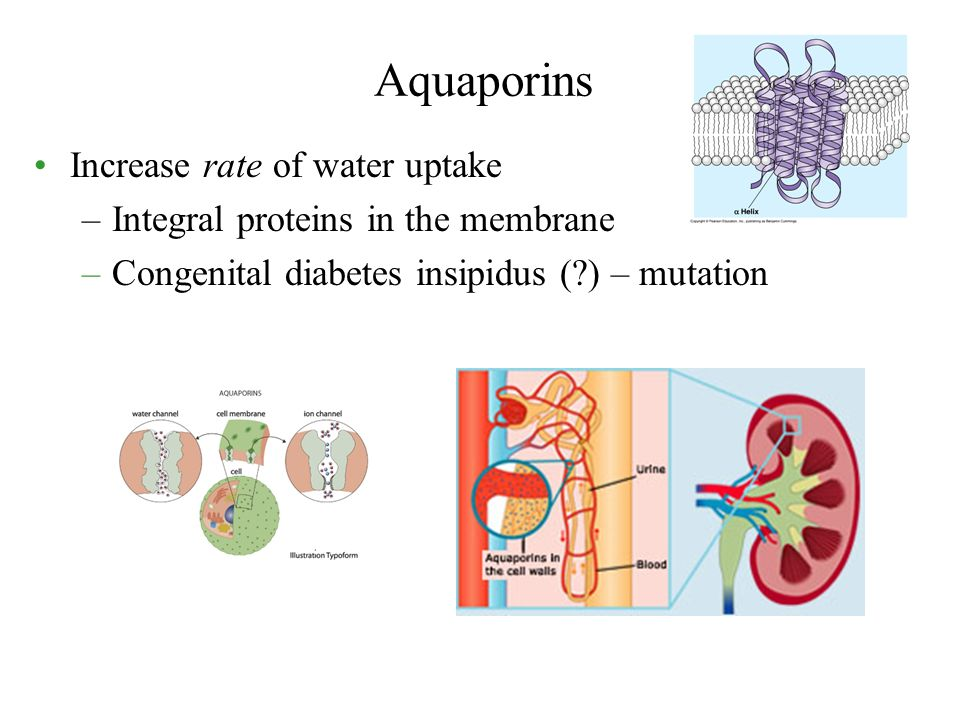 Aquaporins Increase rate of water uptake