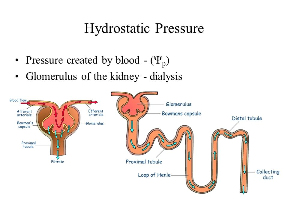 Hydrostatic Pressure Pressure created by blood - (Ψp)