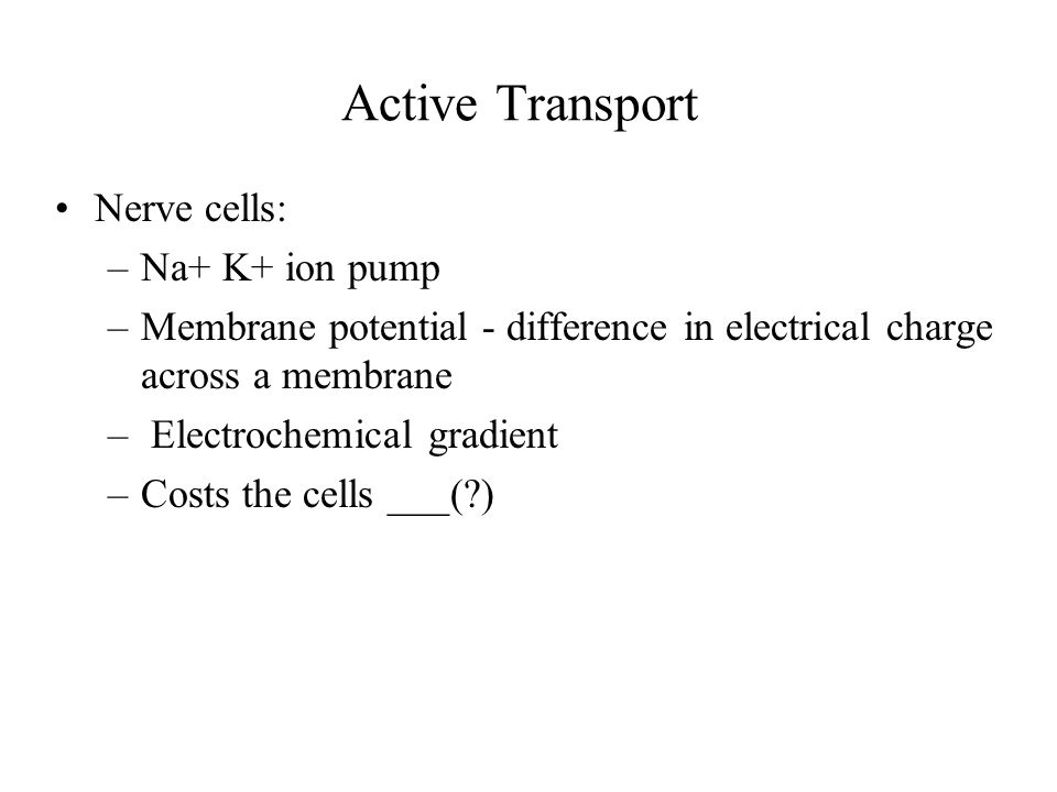 Active Transport Nerve cells: Na+ K+ ion pump